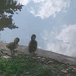 Walpole Park 1