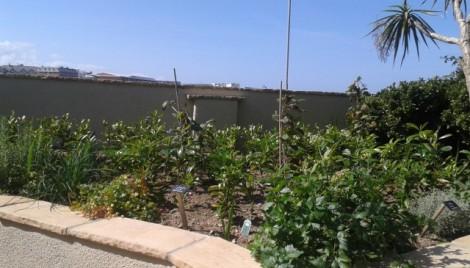 Hebasca Herb Garden Bude
