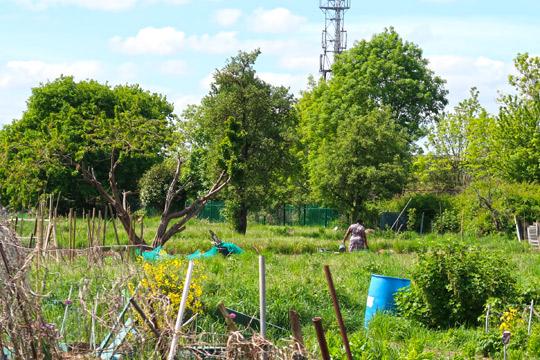 slough_allotments_gardening_outdoors_berkshire-2