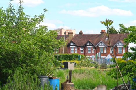 slough_allotments_gardening_outdoors_berkshire-3