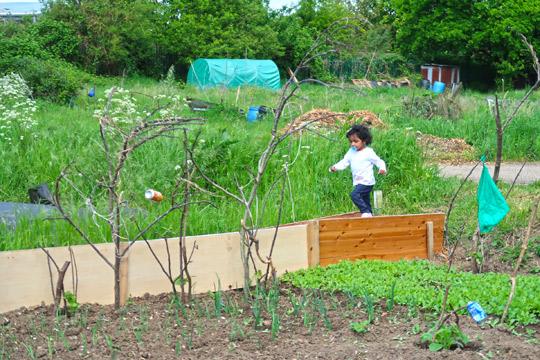 slough_allotments_gardening_outdoors_berkshire-6