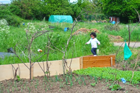 slough_allotments_gardening_outdoors_berkshire-6