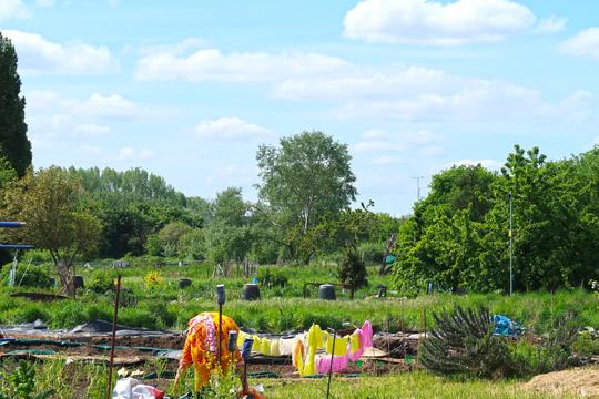 slough_allotments_gardening_outdoors_berkshire