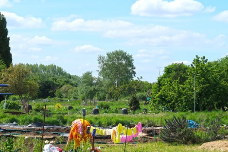 slough_allotments_gardening_outdoors_berkshire