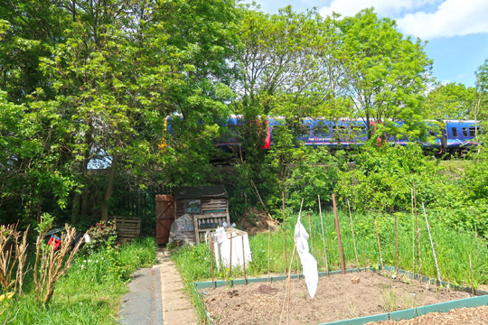 slough_allotments_gardening_outdoors_berkshire_windsor_gwr_train