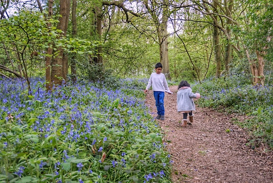 Where and when to see Magnolia, Cherry Blossom, Wisteria, Bluebells and Poppies around Slough