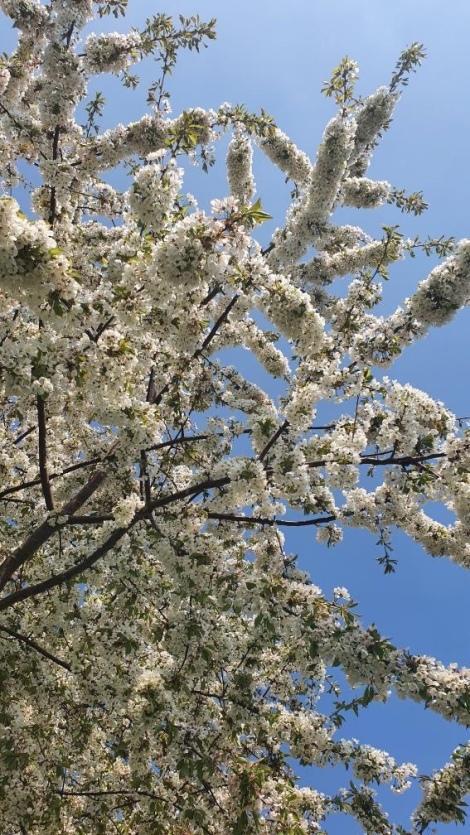 Blossom Tree Slough, Berkshire