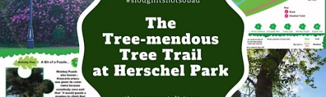 herschel-park-tree-trail-childrens-activity-slough-berkshire