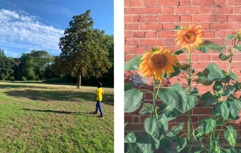 Hanwell GWR Train Viaduct - sunflowers
