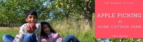 Apple Picking, Home Cottage Farm, Iver, Buckinghamshire