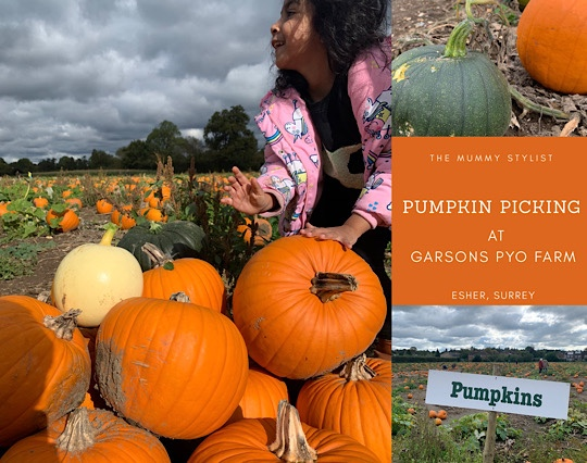 Garsons Farm Pumpkin Picking
