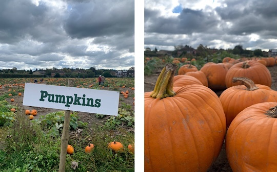 Garsons PYO Pumpkin Picking Farm