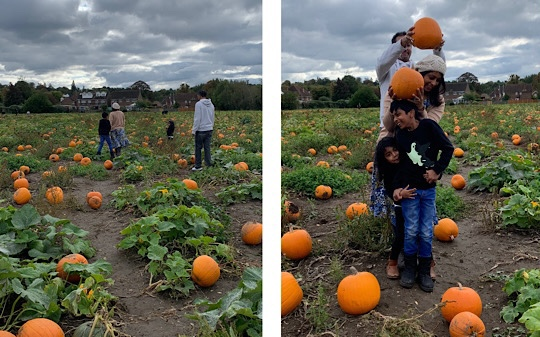 Pumpkin Picking Garsons