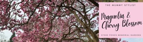 Magnolia-Cherry-Blossom-Stoke-Poges-Memorial-Gardens