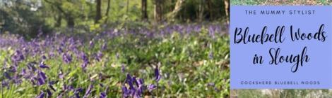 cocksherd-bluebell-woods-slough-berkshire